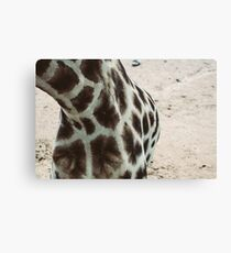 Giraffe Pattern Closeup Canvas Print