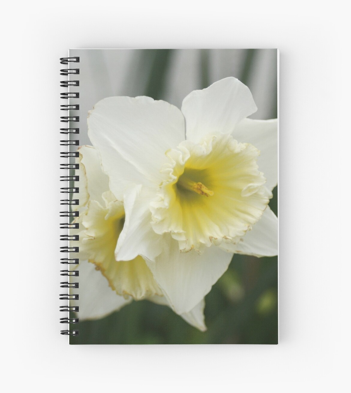 White And Yellow Daffodils Early Spring Flowers Spiral Notebooks