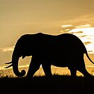 Africa Nature Silhouette - Elephant at Sunset by Kellie Netherwood