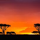 Africa Nature Silhouette - Sunset Grazing by Kellie Netherwood