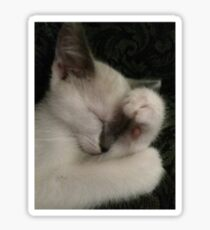 Napping Kitten Mocha Sticker
