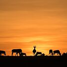 Africa Nature Silhouette - Sunrise Grazers by Kellie Netherwood