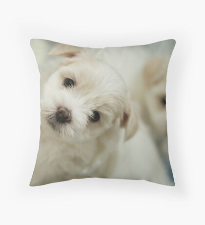 Puppy Stare Throw Pillow