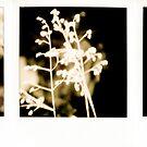 #012 by Paul Desmond