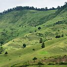 Green Hills by Neater