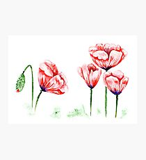 Watercolor poppies illustration Photographic Print