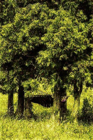 Perfect hammock by Yevgeni Kacnelson