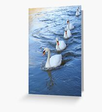 Swan lane Greeting Card