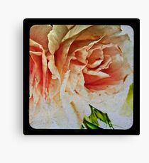 beautiful begonia Canvas Print