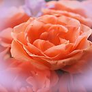 Just peachy by Joyce Knorz