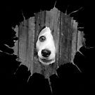 Dog in hole Jack Russell Terrier by Simon-dell