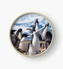 Crooning Adelie Penguins Clock