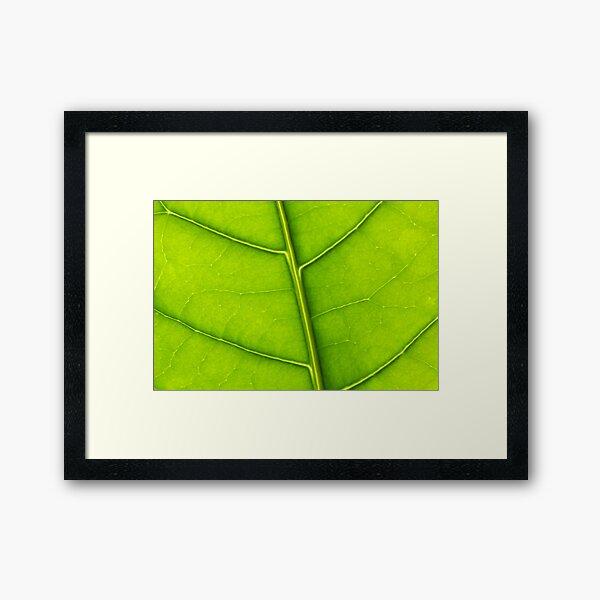 Eco green leaf Framed Art Print