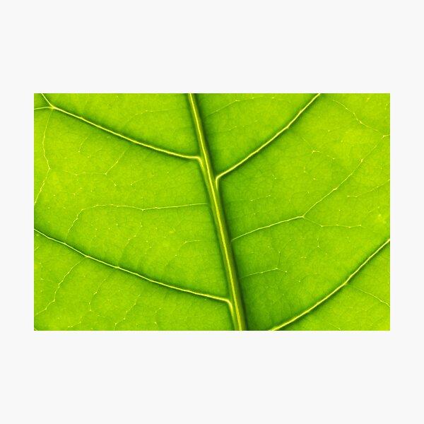Eco green leaf Photographic Print