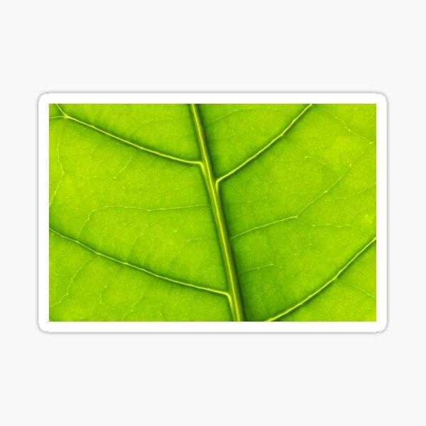 Eco green leaf Sticker