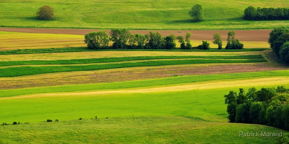 Spring colors in the fields by Patrick Morand