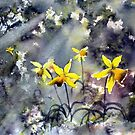 Daffodils of Hope by Glenn  Marshall