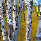 Colorado Autumn by Gary Lengyel