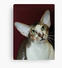 Big Ears and Green Eyes Canvas Print