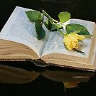 book and rose by danapace