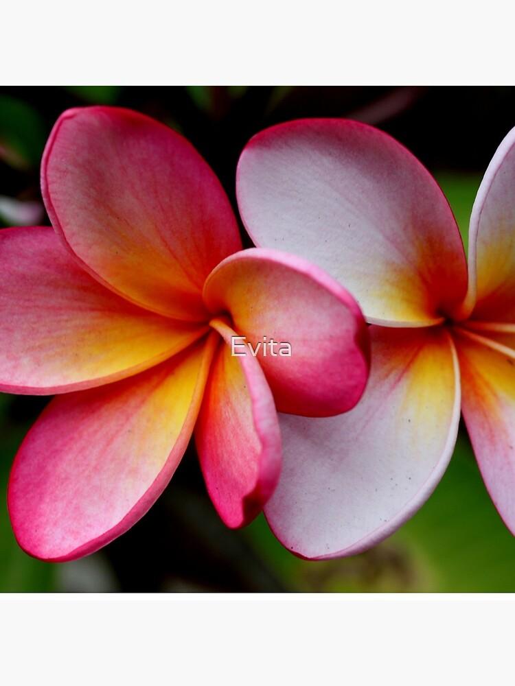 Schattierungen von Pink von Evita
