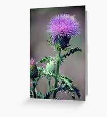 Thistle and Skipper Greeting Card