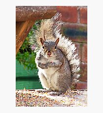 Squirrel on my Bird Table Photographic Print