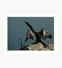 Wings of the Anhinga Art Print
