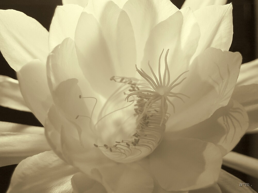 ~Into White~ by a~m .