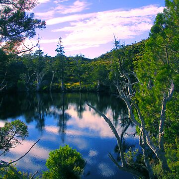 Wombat Pool by Stangus