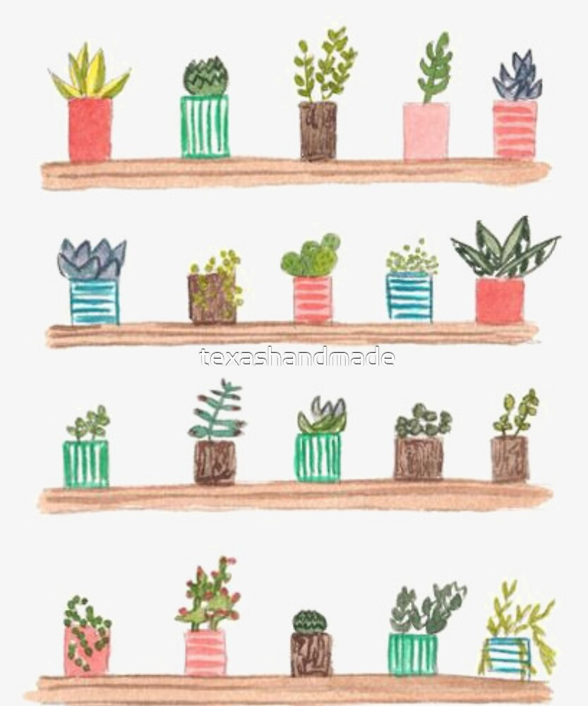 Cactus and plants by texashandmade