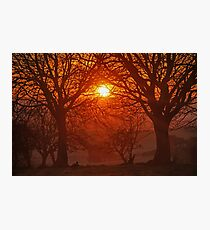 Sunset through the Tress. Photographic Print