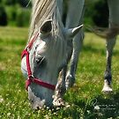Grazing the fresh spring grass by ruxique