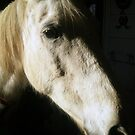 Jasmine, the rescued horse by ruxique