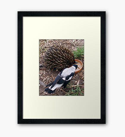 Echidna Framed Print