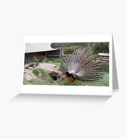 Peacock in Underpants Greeting Card