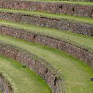 Incan Terraces in Pisaq, Peru by Robert Kelch, M.D.