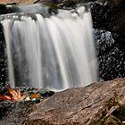 The Waterfall Leaf by Rae Tucker