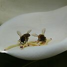 Twin Bees by balticblossom