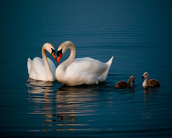 Swan Heart by Theodore Black
