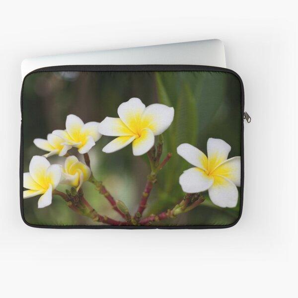 Frangipani leelawadee flowers Laptop Sleeve
