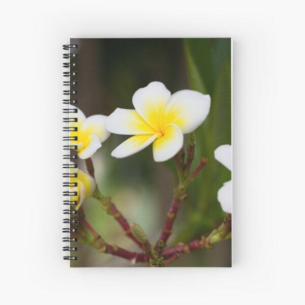 Frangipani leelawadee flowers Spiral Notebook