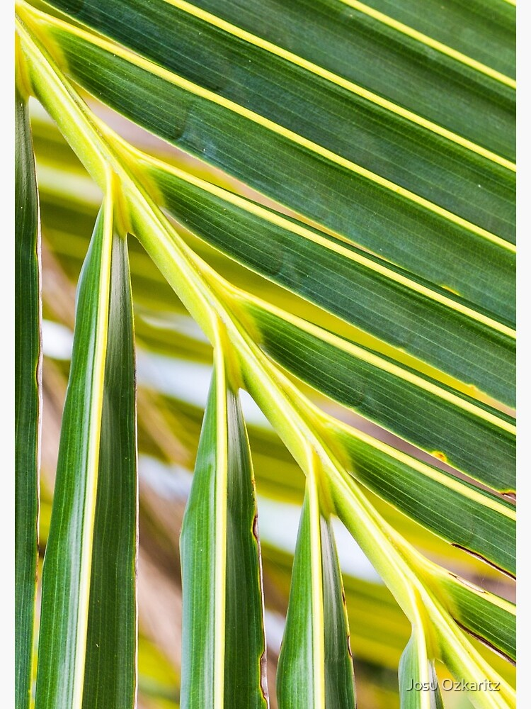 Green palm tree branch by Joshollywood