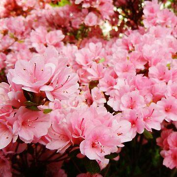Pink garden by MadeleineKyger