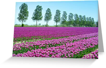 Purple Tulipfield by ienemien