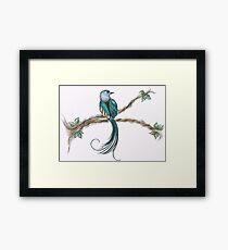 long tail bird Framed Print