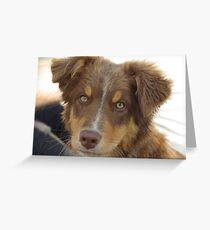 australian shepherd red tri puppy Greeting Card