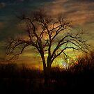A Winters Night by Elizabeth Burton