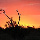 African Sunset by CraigSev