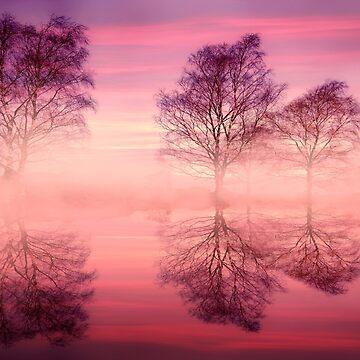 Pink Fog by Lanas